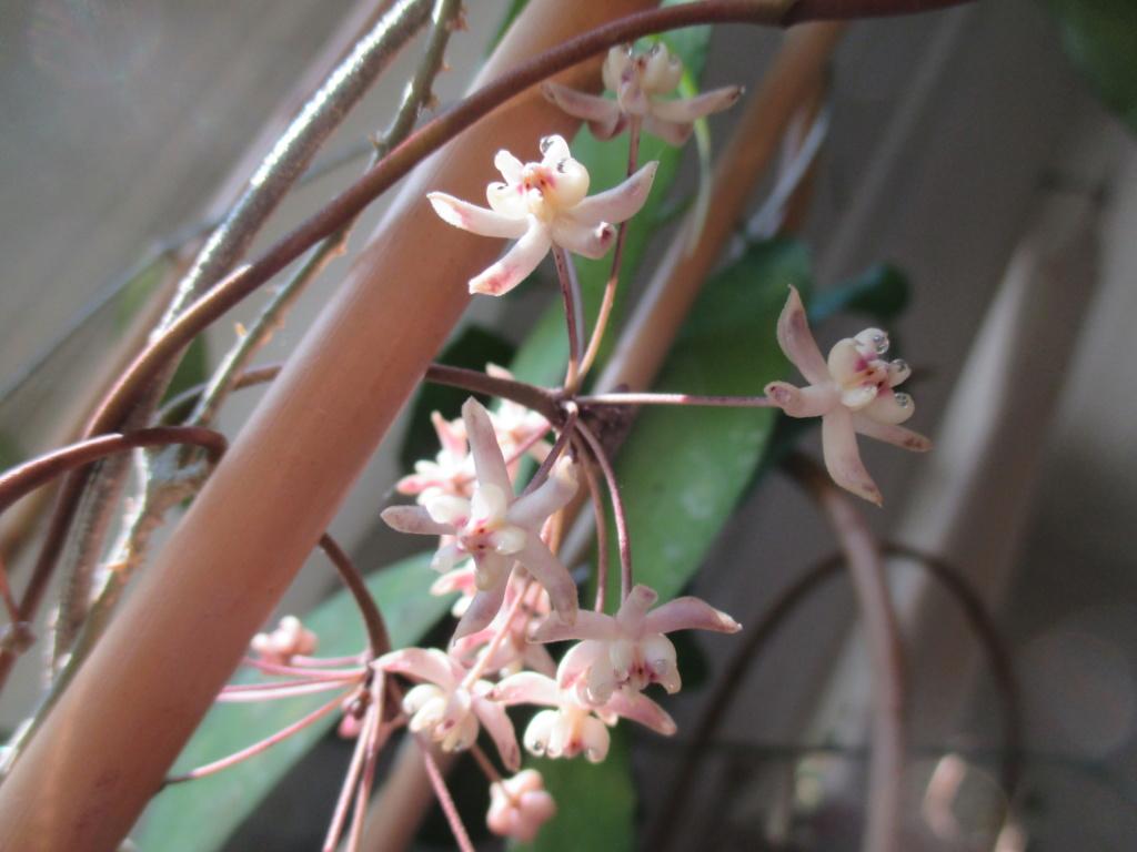 Blüten 2020 Img_2211