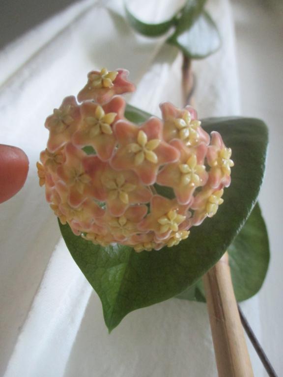 Blüten 2020 - Seite 2 Img_2411