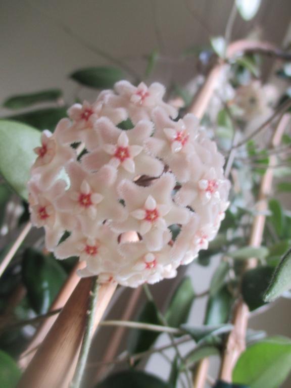 Blüten 2020 - Seite 2 Img_2712