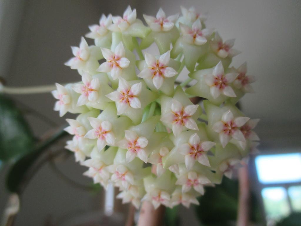 Blüten 2018 Img_4010