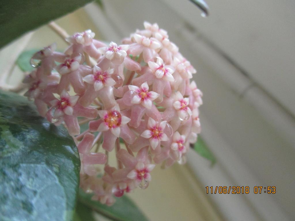 Blüten 2018 Img_4912