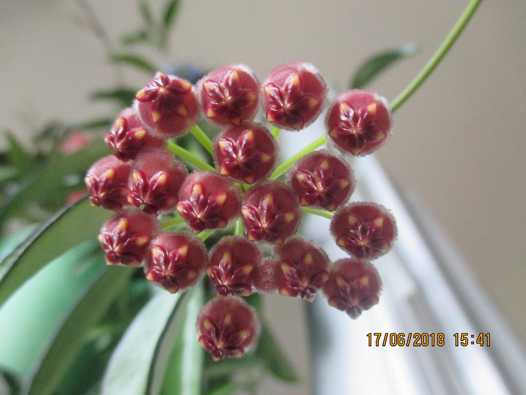 Blüten 2018 Img_5111