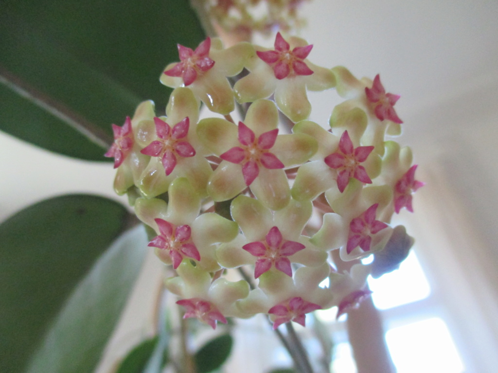 Blüten 2019 Img_8412