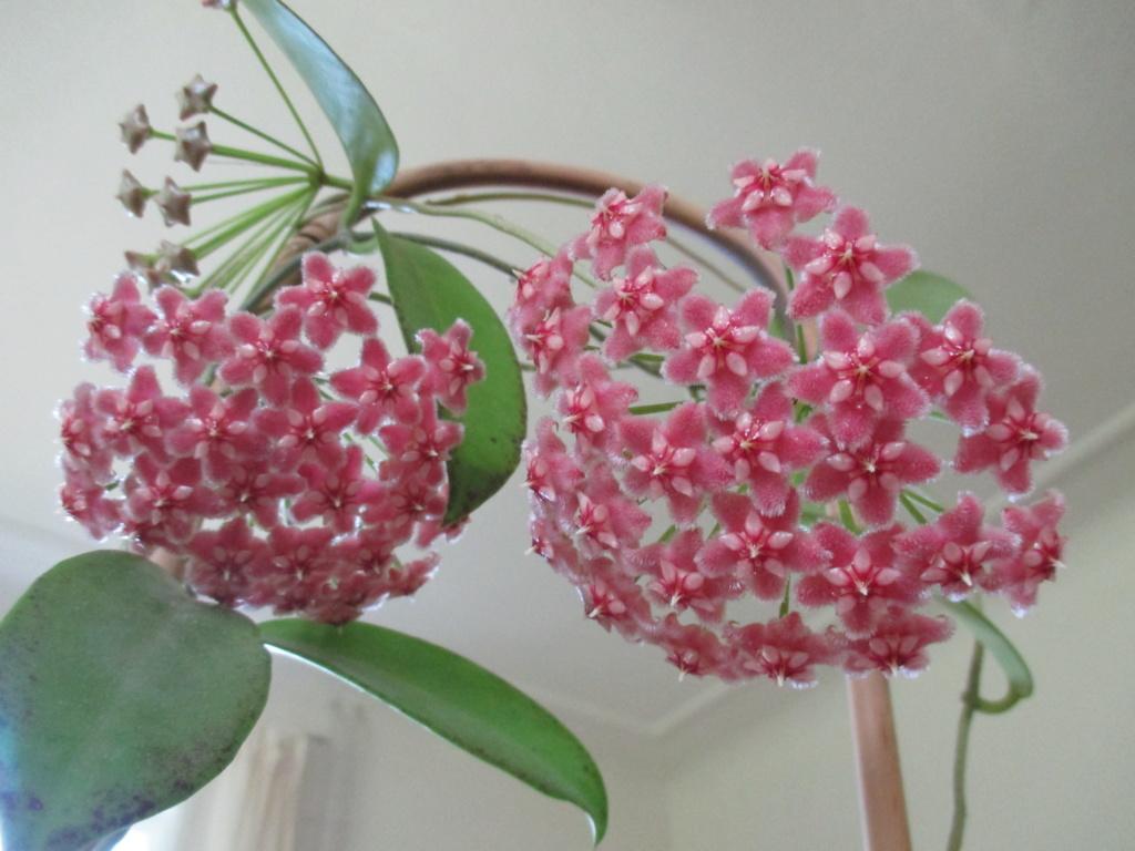 Blüten 2019 Img_9011