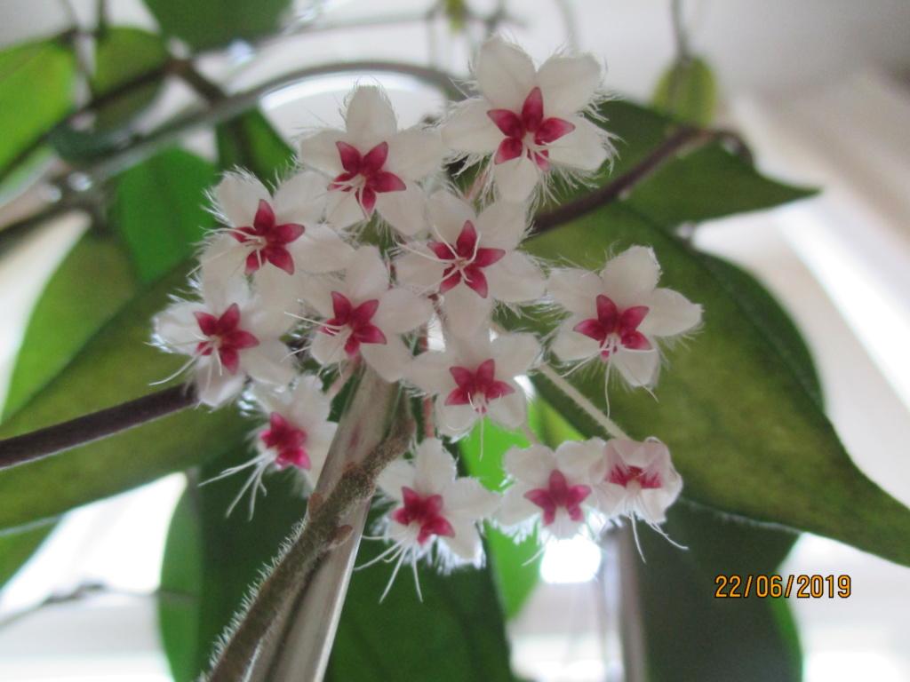 Blüten 2019 Img_9513