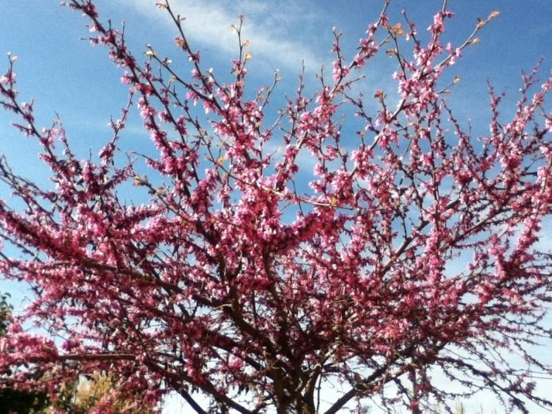 c'est le printemps.... Img_0111