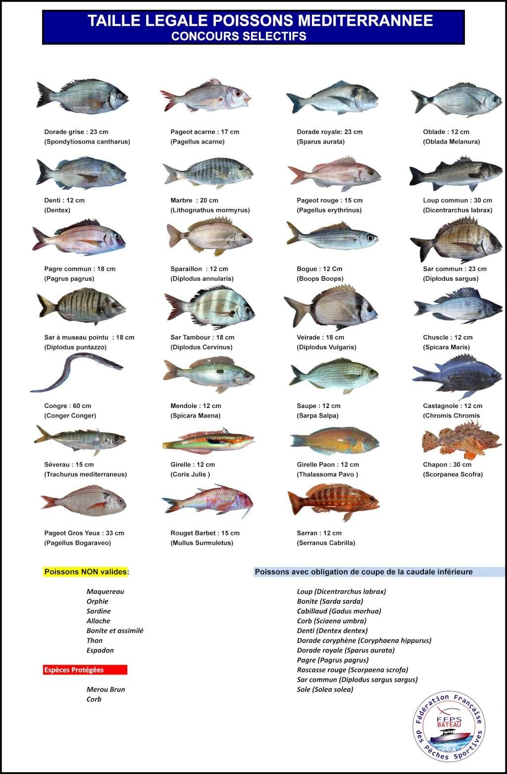 Sélectif pêche à soutenir 30 Avril Fiche_10