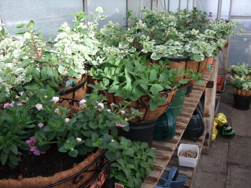My Greenhouse 00210