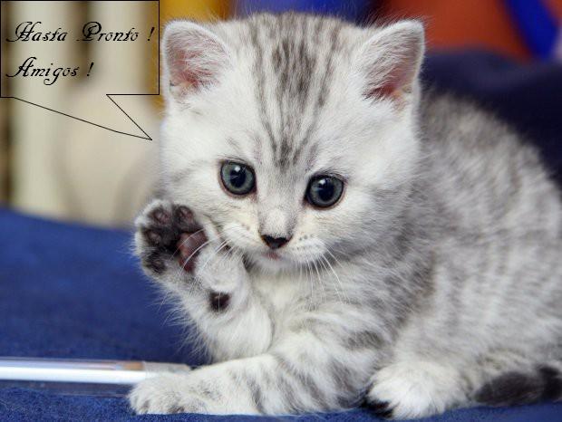 Mini Kit Cat Mag #2 Adios10