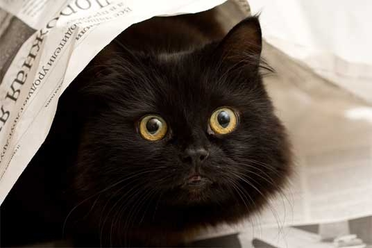 Mini Kit Cat Mag #2 Catjj10