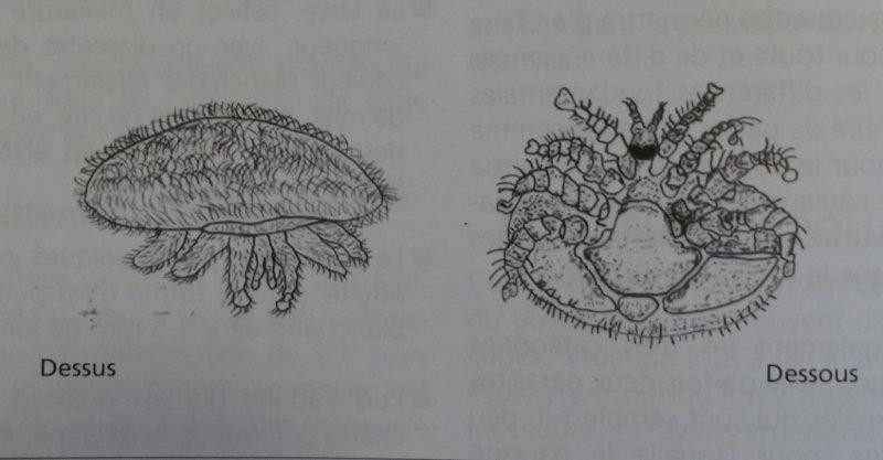 Ruche écologique et barrettes: Lutte VARROAS Dsc00910
