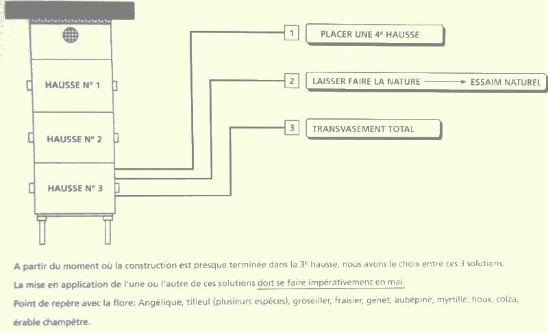 Périodes florales, Observations, Actions Dsc00925