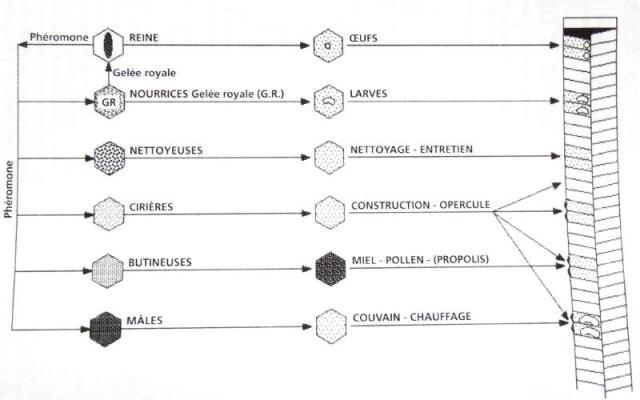 Périodes florales, Observations, Actions Dsc00926