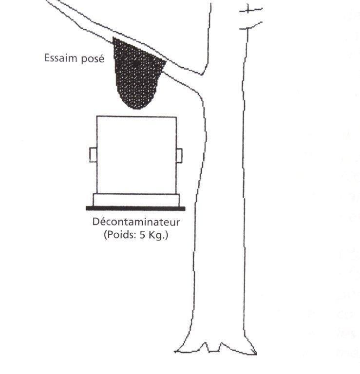 Périodes florales, Observations, Actions Dsc00932