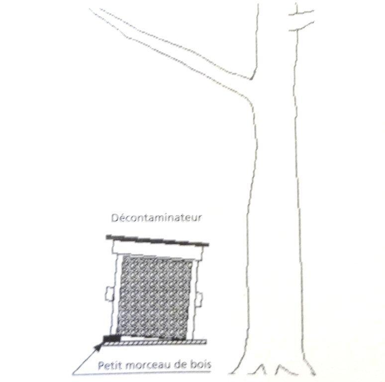 Périodes florales, Observations, Actions Dsc00937