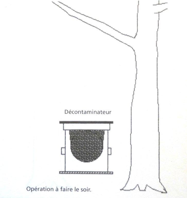 Périodes florales, Observations, Actions Dsc00938