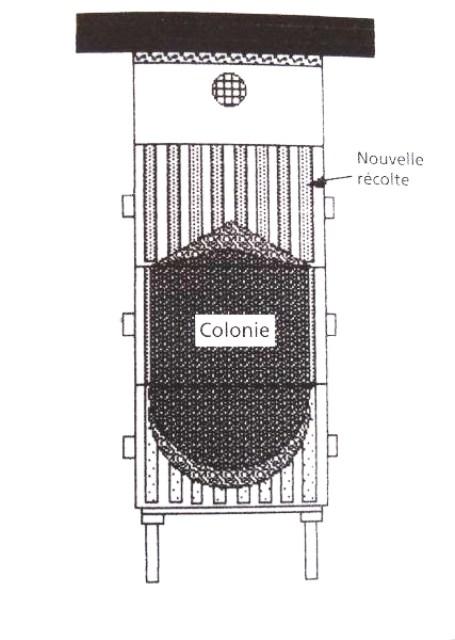 Ruche écologique et barrettes: Lutte VARROAS Dsc00942