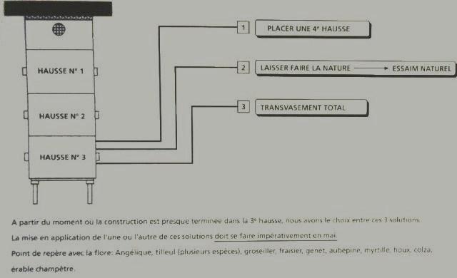 Ruche écologique et barrettes: Lutte VARROAS Dsc00943