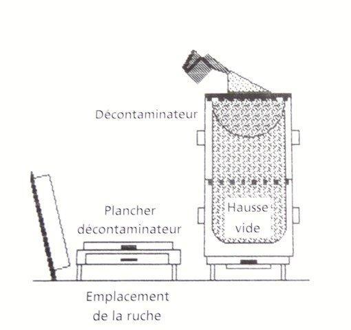 Périodes florales, Observations, Actions Dsc01019