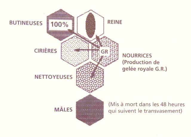 Ruche écologique et barrettes: Lutte VARROAS Dsc01030