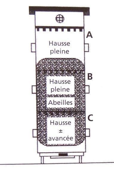 Ruche écologique et barrettes: Lutte VARROAS Dsc01032