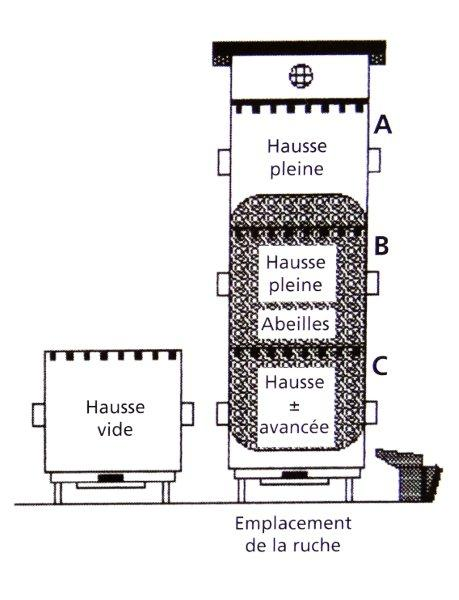 Ruche écologique et barrettes: Lutte VARROAS Dsc01033