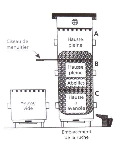 Ruche écologique et barrettes: Lutte VARROAS Dsc01034