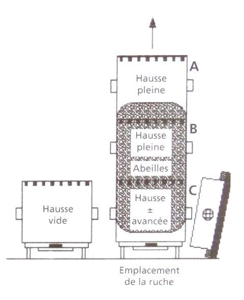 Ruche écologique et barrettes: Lutte VARROAS Dsc01035