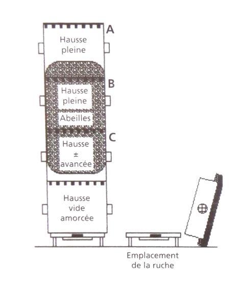 Ruche écologique et barrettes: Lutte VARROAS Dsc01036
