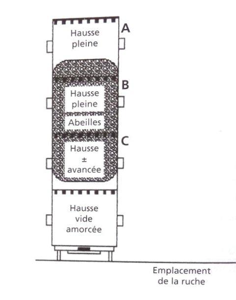 Ruche écologique et barrettes: Lutte VARROAS Dsc01037