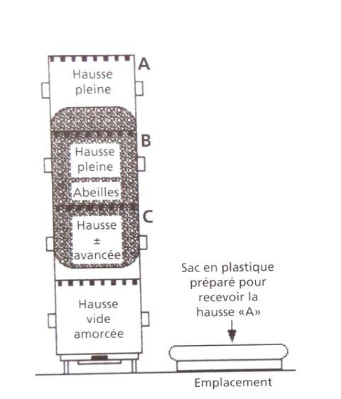 Ruche écologique et barrettes: Lutte VARROAS Dsc01038