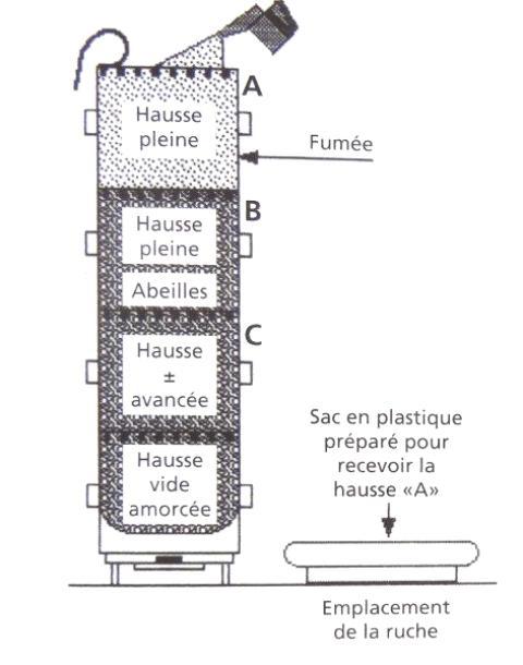 Ruche écologique et barrettes: Lutte VARROAS Dsc01040
