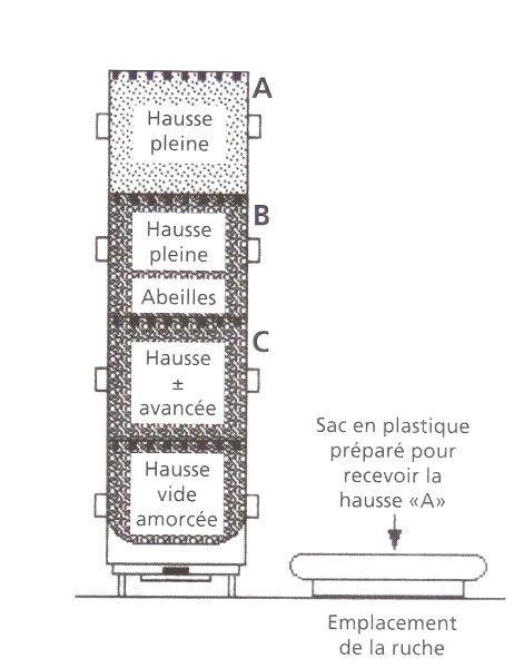 Ruche écologique et barrettes: Lutte VARROAS Dsc01041