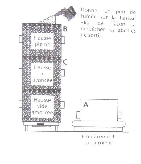 Ruche écologique et barrettes: Lutte VARROAS Dsc01042