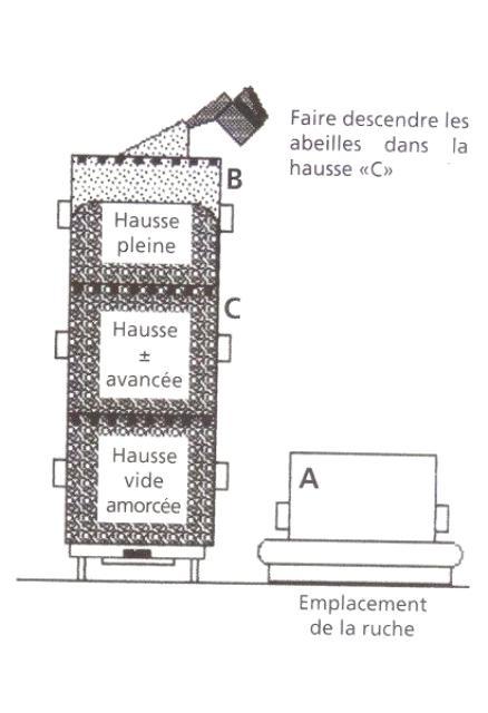 Ruche écologique et barrettes: Lutte VARROAS Dsc01043