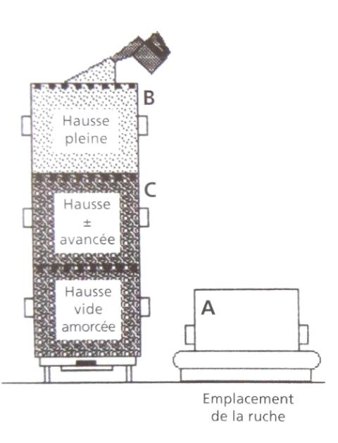Ruche écologique et barrettes: Lutte VARROAS Dsc01044
