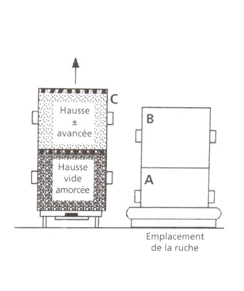 Ruche écologique et barrettes: Lutte VARROAS Dsc01049