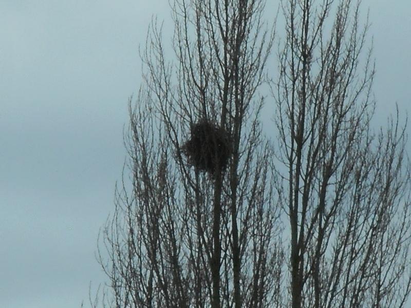 quel est ce nid d'oiseaux? Dscn2518