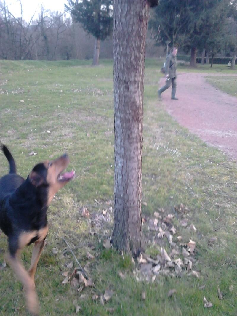 """dur dur d""""etre un chien  Dsc_0216"""
