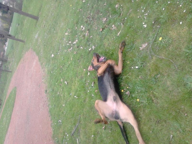 """dur dur d""""etre un chien  Dsc_0312"""