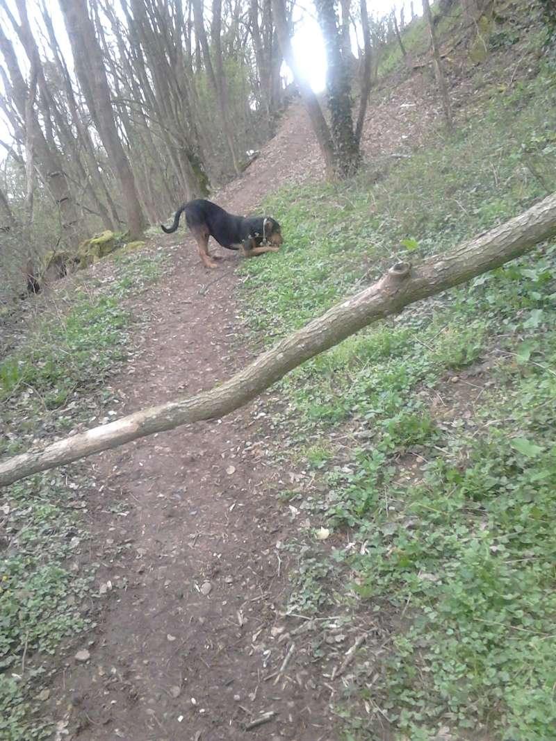 """dur dur d""""etre un chien  Dsc_0317"""