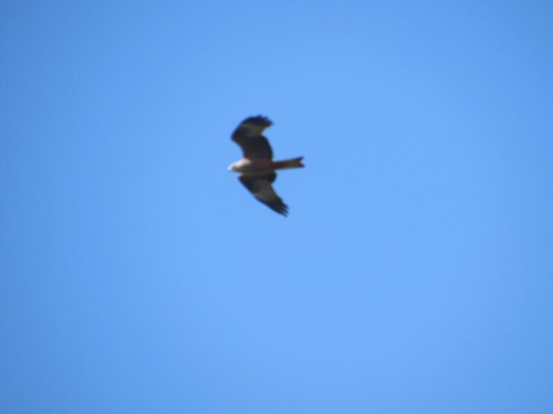 Identification d'oiseaux ! Img_6610