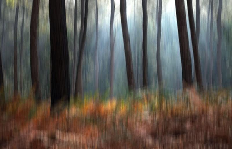 [fil ouvert] la forêt dans tous ses états - Page 3 28291010