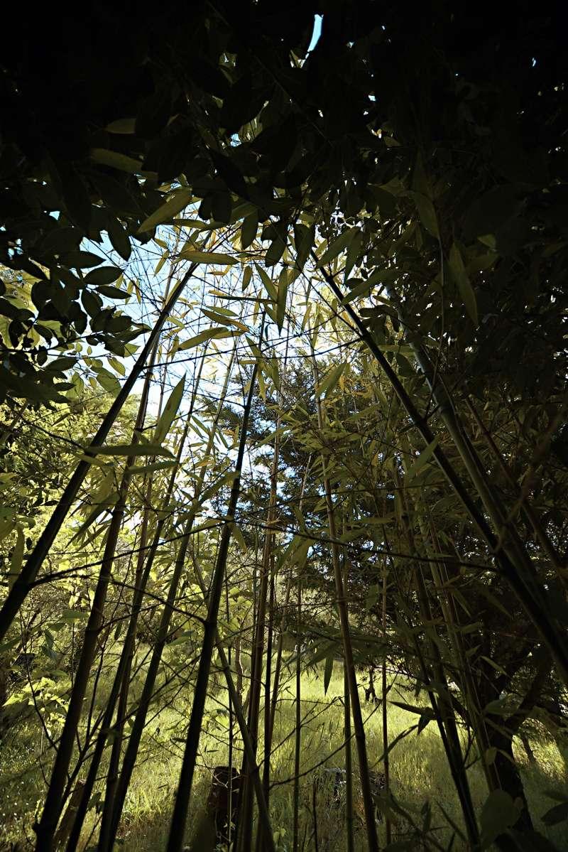 [fil ouvert] la forêt dans tous ses états - Page 3 Clairi11