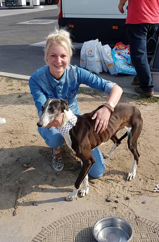 Alina douce galga noire et blanche, 10 ans Scooby France Adoptée Tinali11