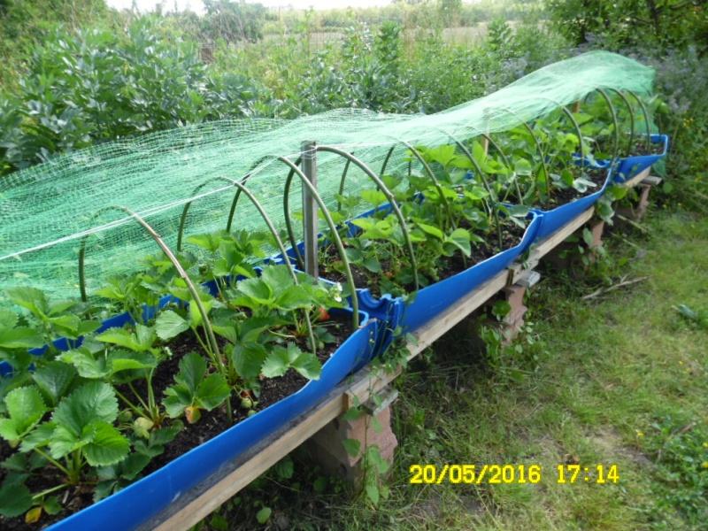 bac de culture pour  fraise ou legume Sam_0531