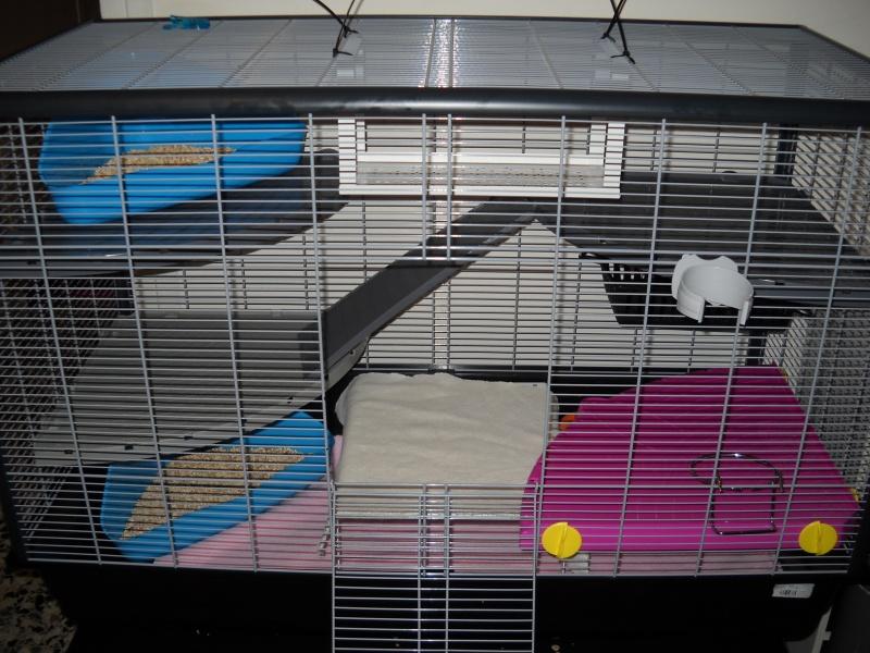 Photos de vos cages - Page 6 Dscn0014