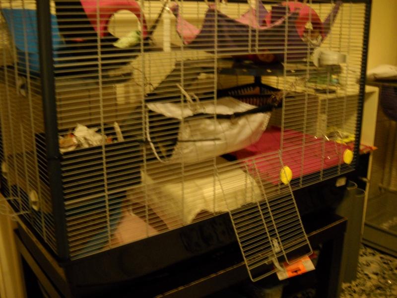 Photos de vos cages - Page 6 Dscn0017