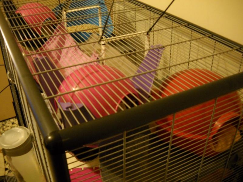Photos de vos cages - Page 6 Dscn0019