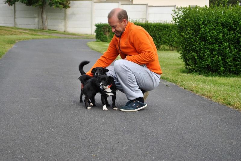 VANY [ex. VANILLE], femelle croisée, petite taille, née en 2012 (Pascani)- adoptée par Valerie ( Belgique) - Page 11 Dsc_0510